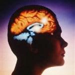 système cérébral