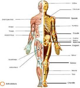 Des os et par-dessus des muscles !