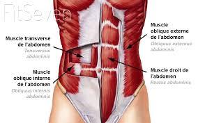 Sangle abdominale