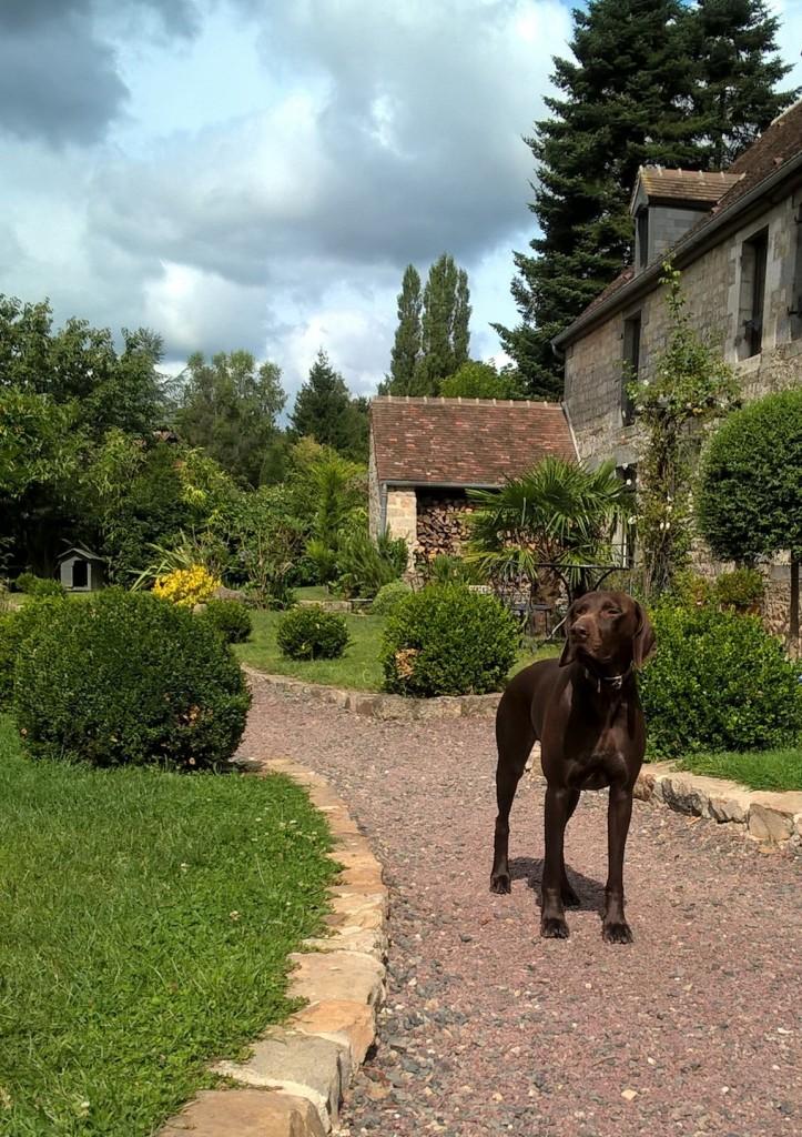 Le chien du Manoir de la prise de Tarot